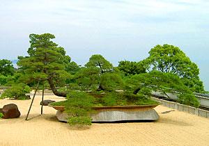 日本一大きな盆栽