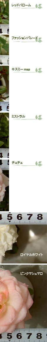 100529-71_02.jpg