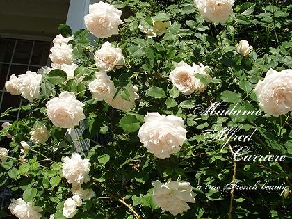 130712-08_MadameAlfredCarriere.jpg